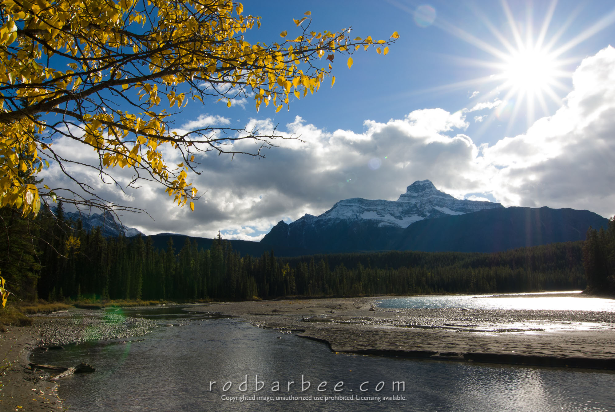 Barbee_070923_2_0971 |  Autumn scenery along the Icefields Parkway