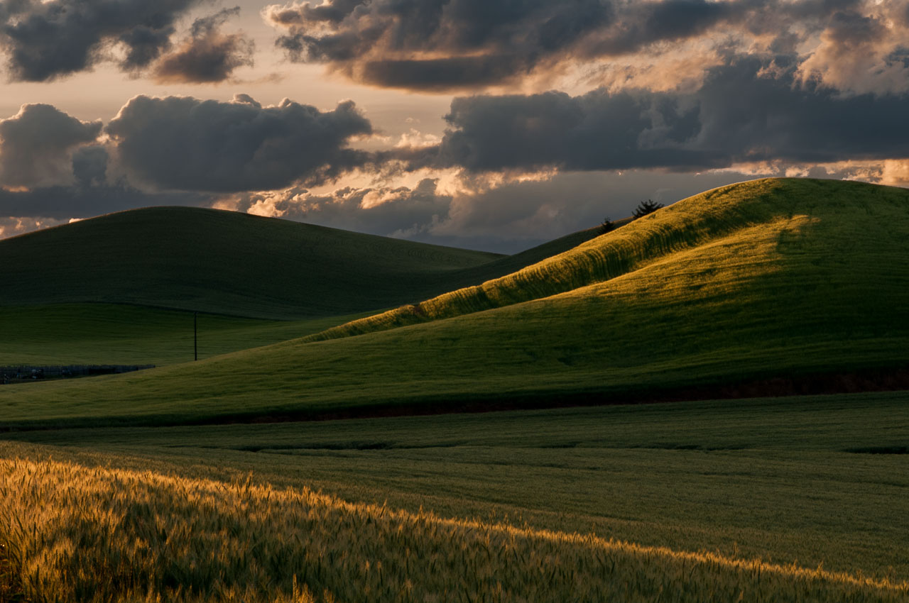 Barbee_140625_3_4986 |  Wheat field near Colfax at sunrise. | Palouse