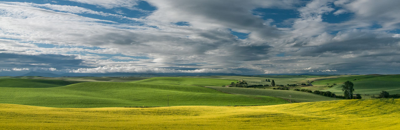 Barbee_140628_3_5416 |  Canola field off of Seabury Road, north of Oaksdale, WA | Palouse