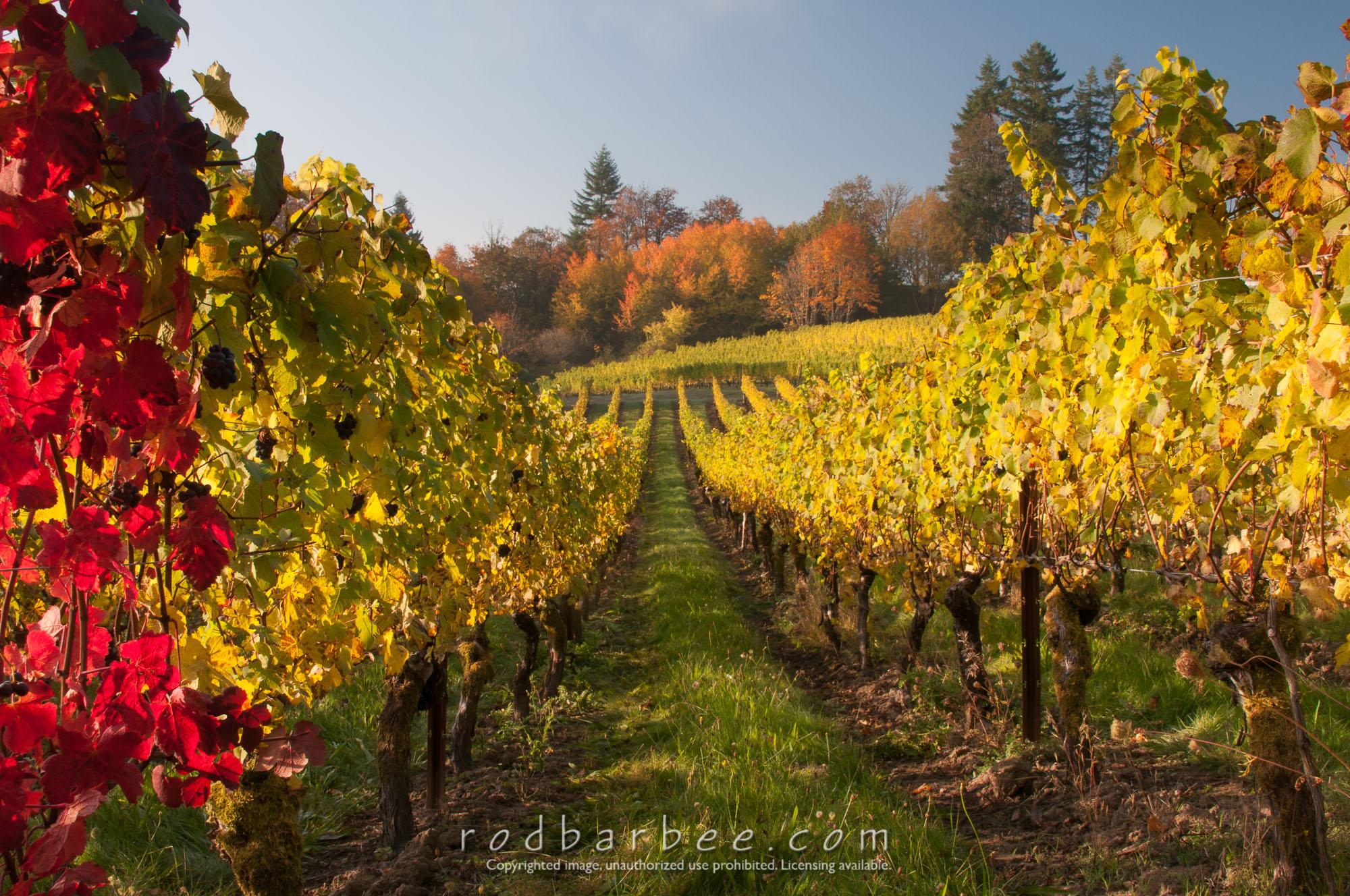 Barbee_131017_3_3184 |  Elk Cove Winery