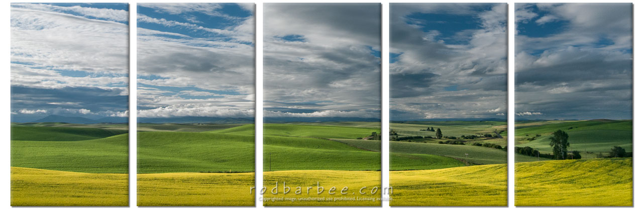 Barbee_140628_3_5416-panel-white |  Canola field off of Seabury Road, north of Oaksdale, WA